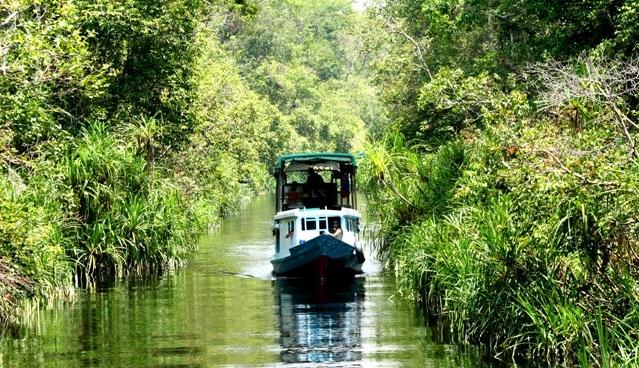 Orang Utan National Park Tanjung Puting
